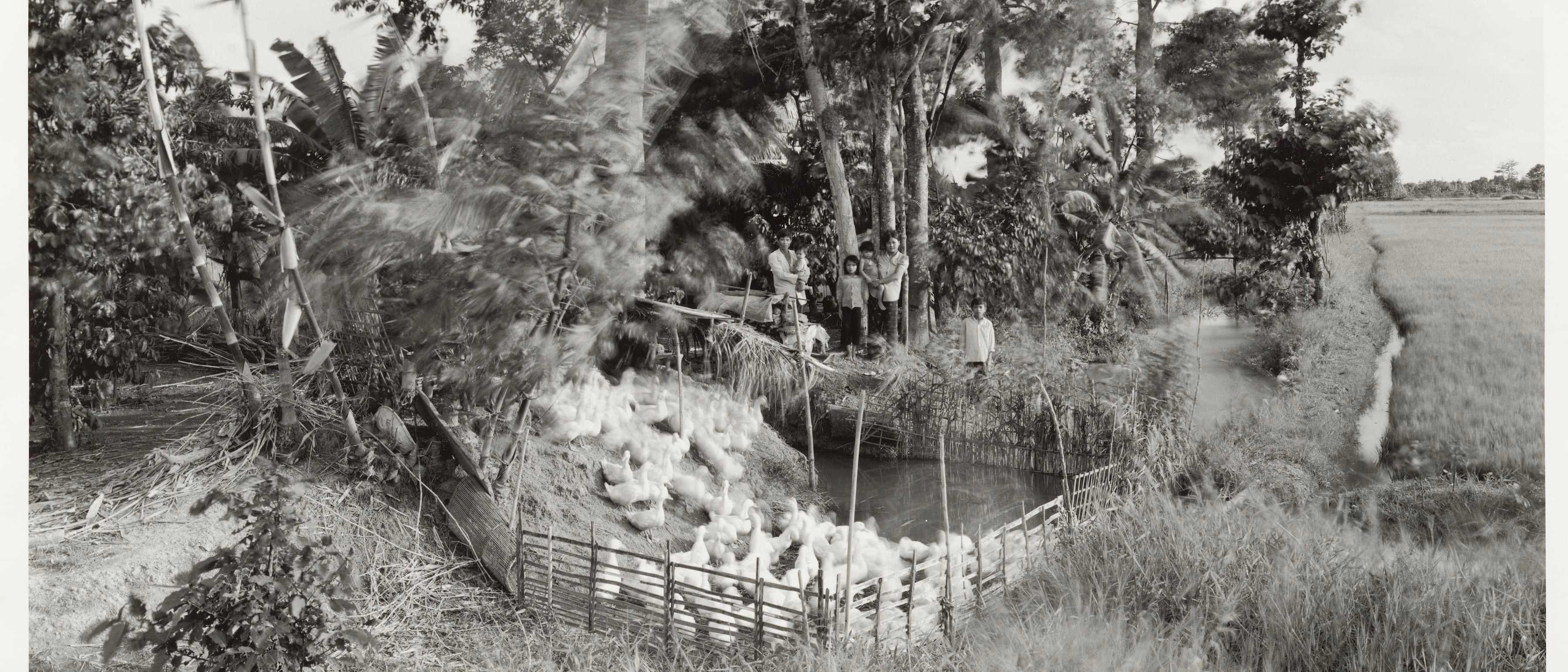 Black and white photograph of a family standing in a grove of trees; in front of them is a fenced pond, with many ducks in and near it